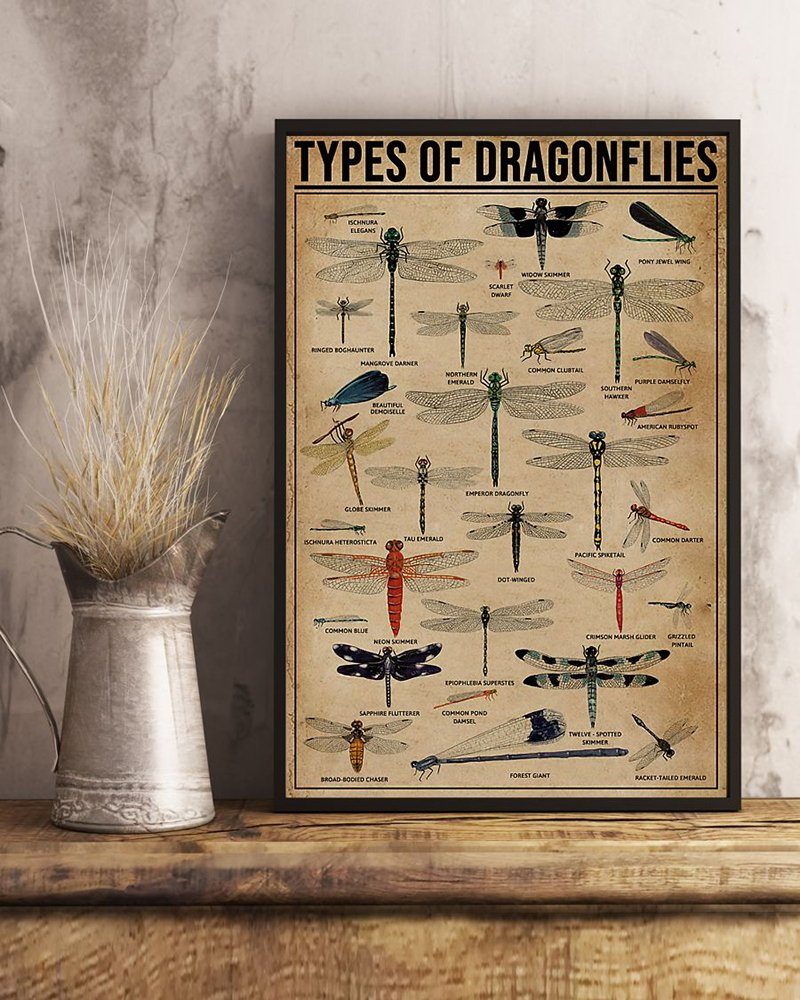 Types of dragonflies dragonfly knowledge poster 2