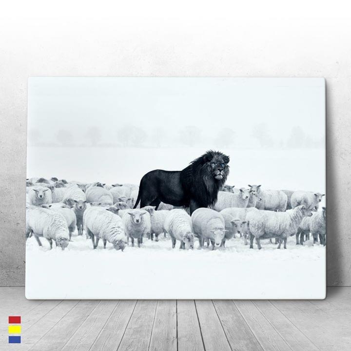 Black lion among sheeps poster 4