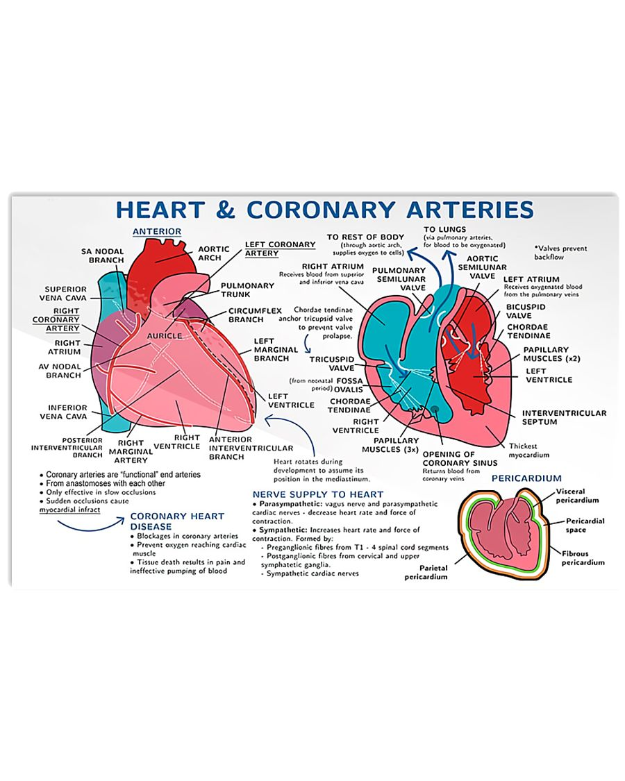 heart and coronary arteries cardiologist poster 2