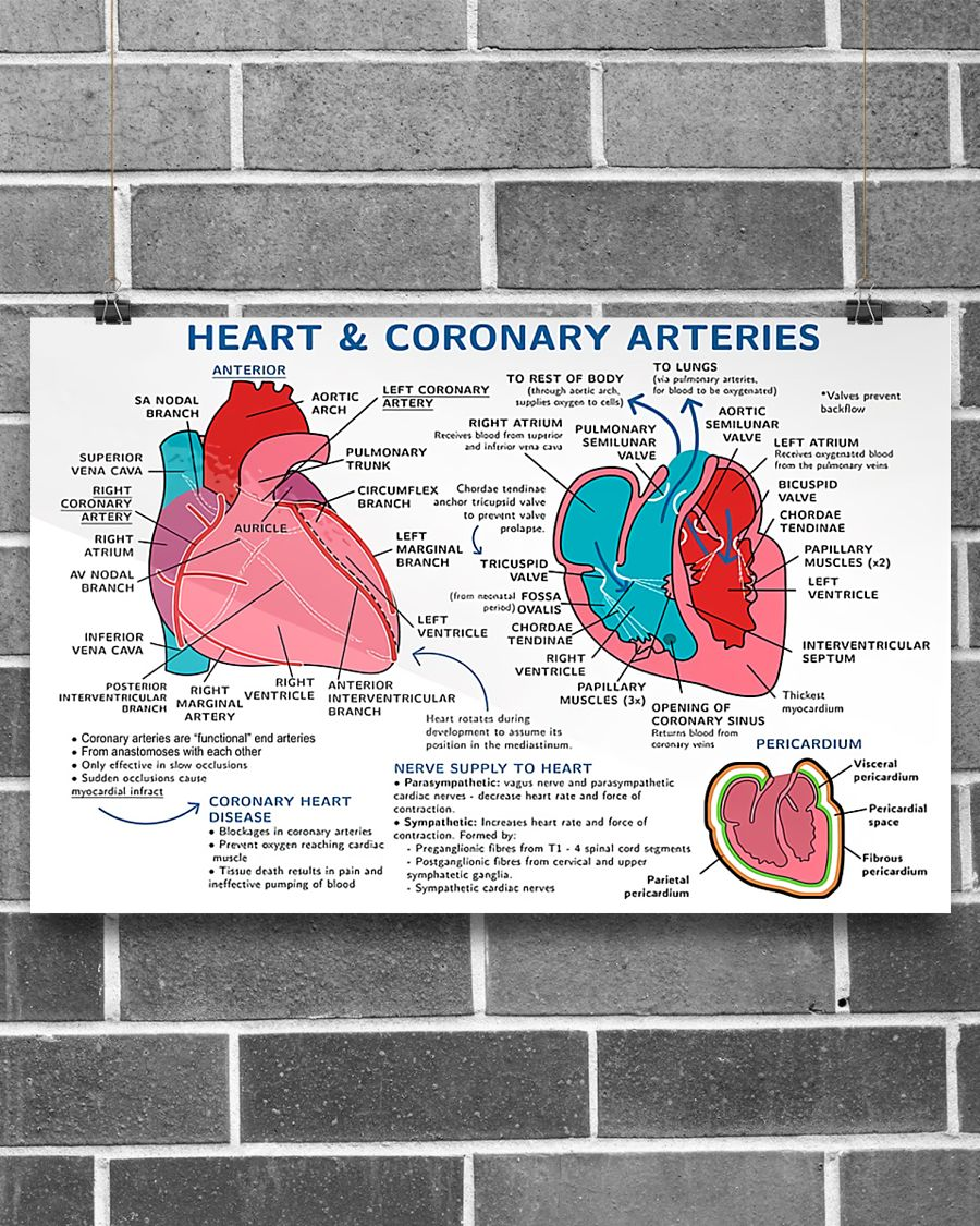heart and coronary arteries cardiologist poster 3