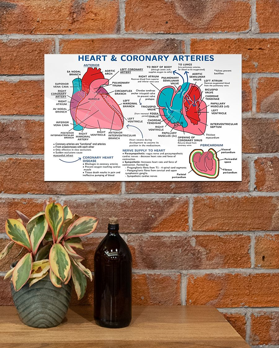 heart and coronary arteries cardiologist poster 4